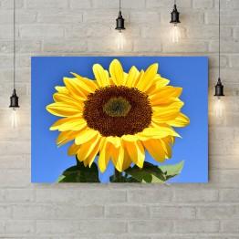 "Картина на холсте ""Солнечный подсолнух"""