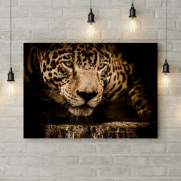 """Картина на холсте """"Взгляд ягуара"""""""
